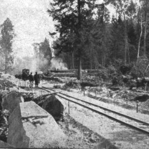 Timber export by the forest railway, photo by Archive of Białowieża National Park