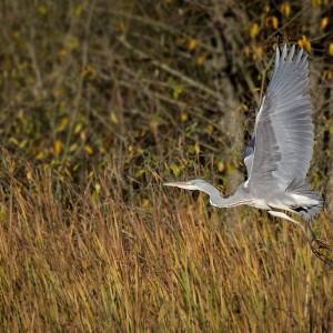 Crane, photo by Sławomir Kowalczyk
