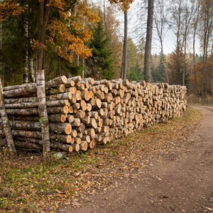 Wood, photo by Sławomir Kowalczyk