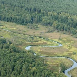 Knyszyńska Forest, photo by Grzegorz Dworakowski