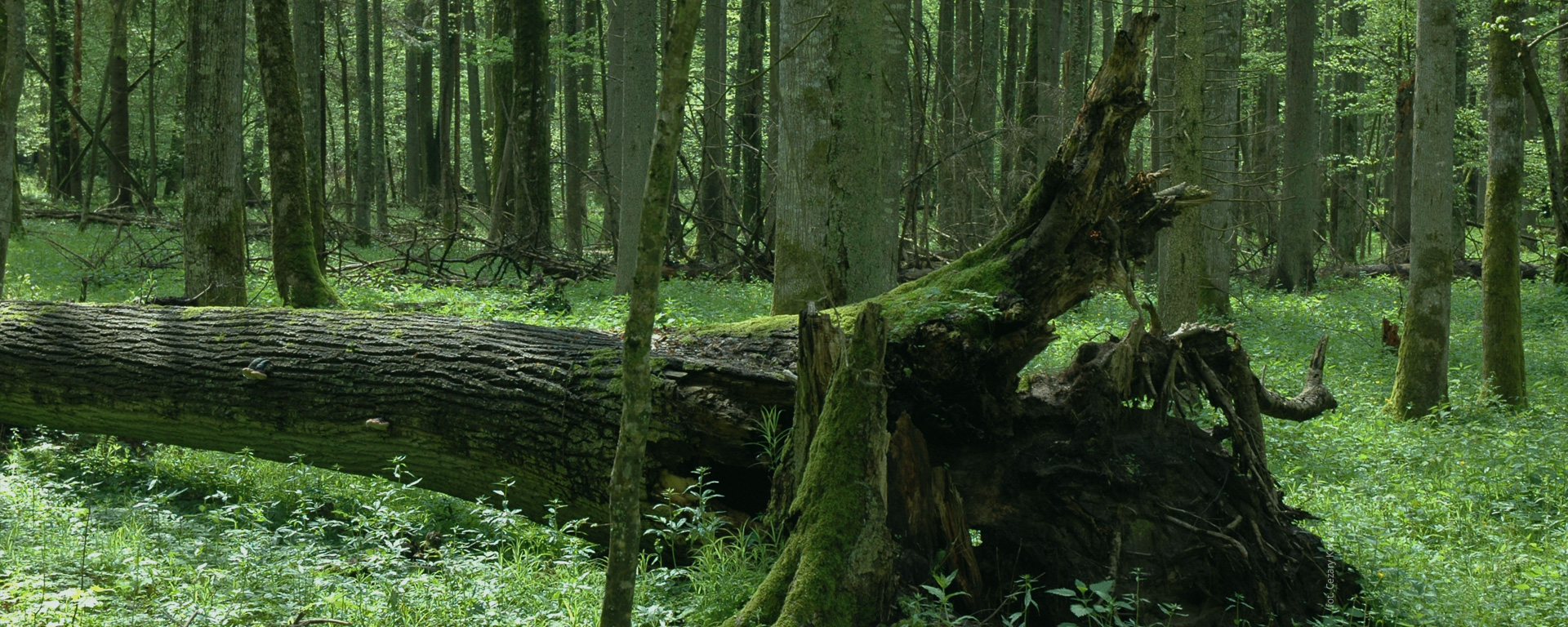 Mobile guide to the Bialowieza Forest