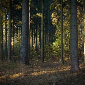 Forest, photo by Sławomir Kowalczyk