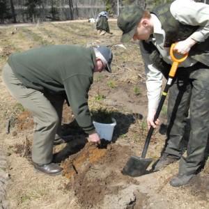 Forest planting, photo by M. Nowicka-Szpakowicz
