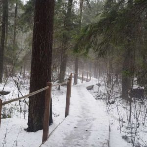 """The """"Bison Ribs"""" forest trail, photo by Klaudia Formejster"""