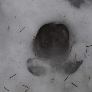Trail in the snow, photo by Klaudia Formejster
