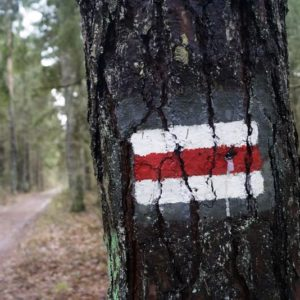 Marking paths in the forest, photo by Klaudia Formejster