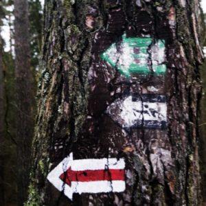 Marking trails, photo by Klaudia Formejster