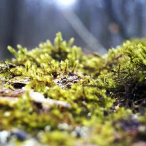 Moss, photo by Klaudia Formejster