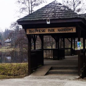 Białowieża National Park, photo by Klaudia Formejster