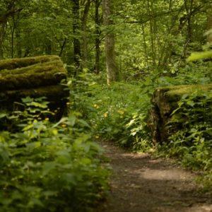 Białowieża National Park, photo by Łukasz Ławrysz