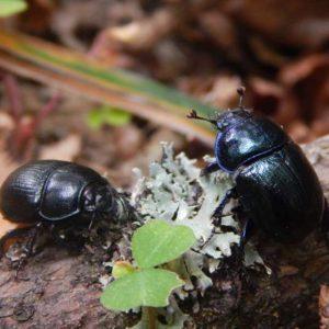 Beetle, photo by Klaudia Formejster