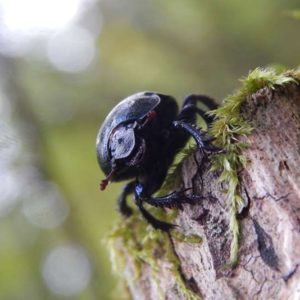 Beetle, photo by Klaudia Formejster