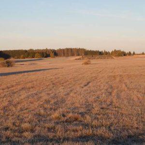 Meadow, photo by Klaudia Formejster