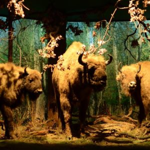 Exposure at The Nature and Forest Museum at Białowieża National Park, photo by Łukasz Ławrysz